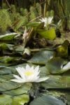medium_jardin_naturel.jpg