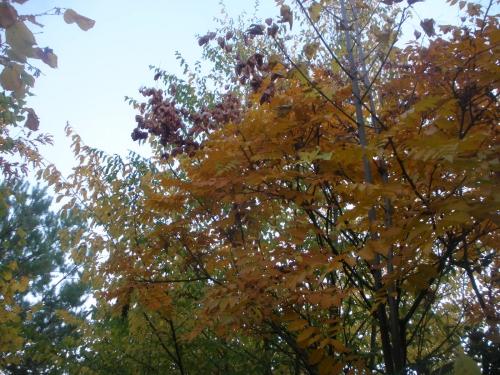 merveille,automne,petits riens