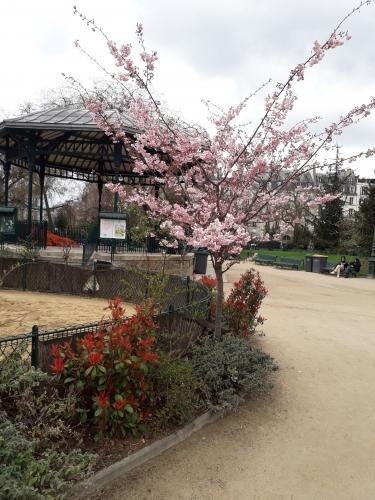 printemps,allergies,arbres