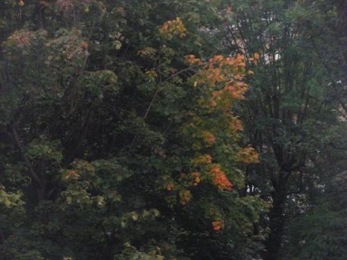 automne,couleurs,chauffage