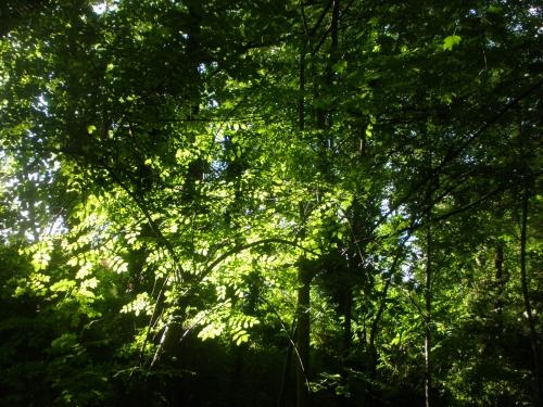 soleil,arbres,silence