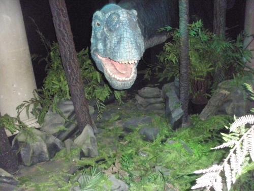 dinosaures,fossilles,merveille,petite soeur
