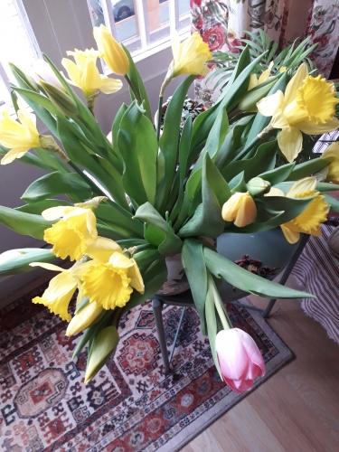 le goût,fleurs,plantes,vase