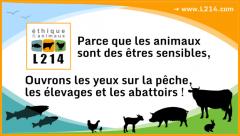 animaux,vegan,abattage,corniaux