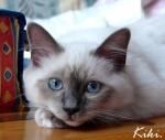 chat, livre, punition, famille