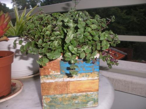 cartes de fidélité,achat,plante,chaine