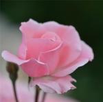 maidon, roses, squatt